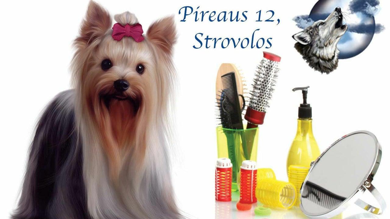 Lycoriana Pet Shop and Grooming Salon - 1